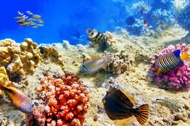 Image result for sea fishes