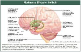 effects of cannabinoids on the body