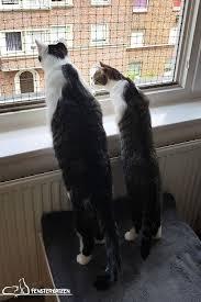 Fenstersicherung Für Katzen Ohne Bohren такие разные и такие