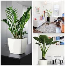 Decorating With Indoor Plants  Plants Decorating And HouseDecorative Plants For Home