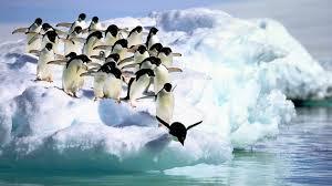 penguin desktop wallpaper. Brilliant Penguin Adelie Penguins And Penguin Desktop Wallpaper
