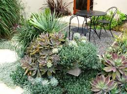 View in gallery Succulents overflowing on a patio