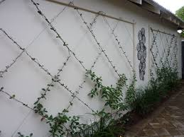 Small Picture Best 25 Wall trellis ideas on Pinterest Trellis Diy garden