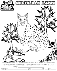 Small Picture Lynx Cat Coloring Pages Coloring Pages
