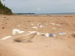 sally s beach provincial park monue