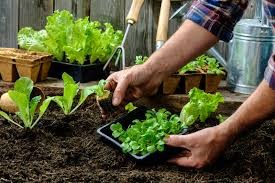 Planning A Kitchen Garden Your Guide To Starting A Vegetable Garden