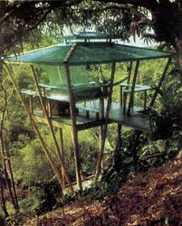Best 25 Tree House Bedrooms Ideas On Pinterest  Beautiful Tree How To Build A Treehouse For Adults