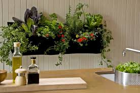 houseplants on a vertical wall