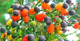 Fruit Salad Trees HomeFruit Salad Trees Usa