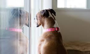 10 best dog door for sliding glass door