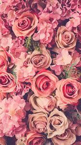 rose wallpaper fl wallpaper phone pink wallpaper backgrounds flowers backgrounds hipster
