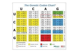 Codon Chart Circle Genetic Codon Poster