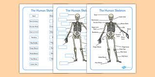 finger joint names. human skeleton labelling sheets (common names) - sheets, bones of finger joint names