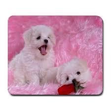 תוצאת תמונה עבור כלבים חמודים