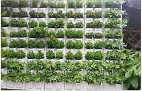 self watering plant flower pot wall