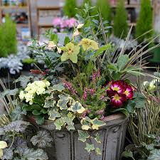 container garden ideas molbaks garden
