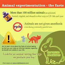 persuasive essay against animal testing against animal testing essay persuasive essay against animal against animal testing essay persuasive essay against animal