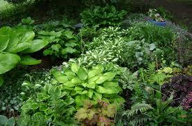 Partial Shade Flower Garden Design Perennials For Shady Areas Griffins Greenhouses
