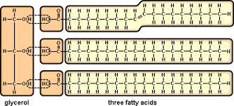 Chapter 3 Carbohydrates And Lipids