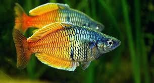Cool Freshwater Fish Aquariums Tank Temp Nice Ideas House