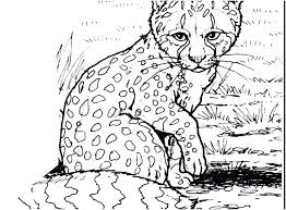 Coloring Pages Snow Leopard Coloring Pages The Perfect Collection
