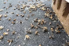 Αποτέλεσμα εικόνας για dead bee