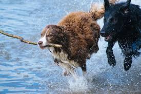 Pes Chovatelská Příručka