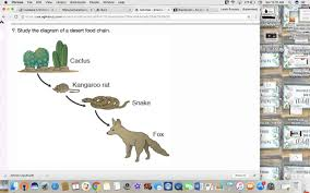 kangaroo rat in food chain collection of types
