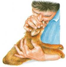 Resultado de imagen para imagenes de RCP a animales perros y gatos