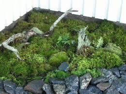 a moss corner
