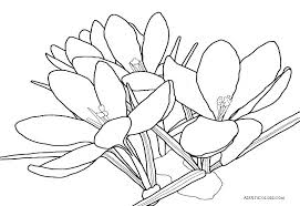 Spring Flower Coloring Pages For Toddlers Flowers Preschoolers
