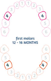 Teething Chart Babies Baby Teething Chart Order Of Teeth Appearance