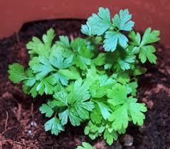 Small Picture Garden Design Garden Design with Indoor Herb Garden Ideas Diy