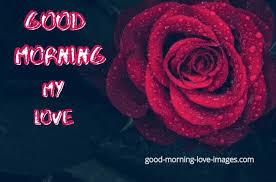 best 75 good morning rose images best