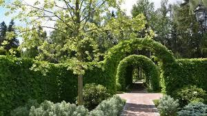 Живая изгородь: из чего сделать, быстрорастущие кустарники и ...