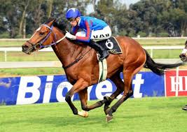 race log cts log and cts race entries on cape thoroughbred sales