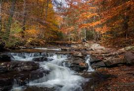 Check spelling or type a new query. Tips For Hiking The Falls Trail In Ricketts Glen State Park Uncoveringpa