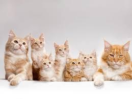 Znalezione obrazy dla zapytania koty