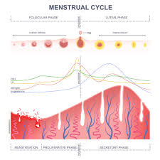 Ovulation Chart Pregnancy Signs Ovulation Questions American Pregnancy Association