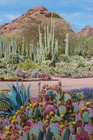 desert botanical garden offers wide variety of classes for kids and s 1