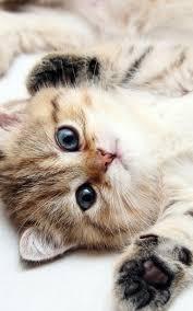 Iphone Cute Kitten Wallpaper