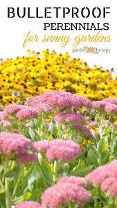 Small Picture Best 25 Full sun perennials ideas on Pinterest Full sun flowers