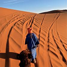 camels in the sahara a photo essay angie away camel riding in the sahara desert