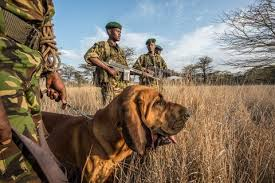 a heart warming photo essay ns protecting wildlife rhino guards in