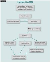 The Renin Angiotensin Aldosterone System Approaches To