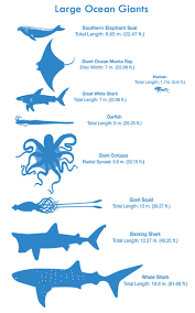 ocean by size see how you size up against the biggest animals in the sea takepart
