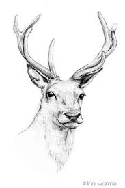 Deer Artwork Google Search Spirit Drawings Art Pencil Drawings