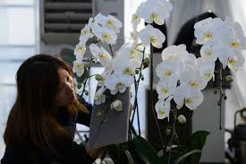 an s business gift culture says it with orchids