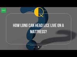 How Long Can Head Lice Live A Mattress