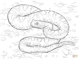 Small Picture Sonoran Desert Sidewinder coloring page Free Printable Coloring
